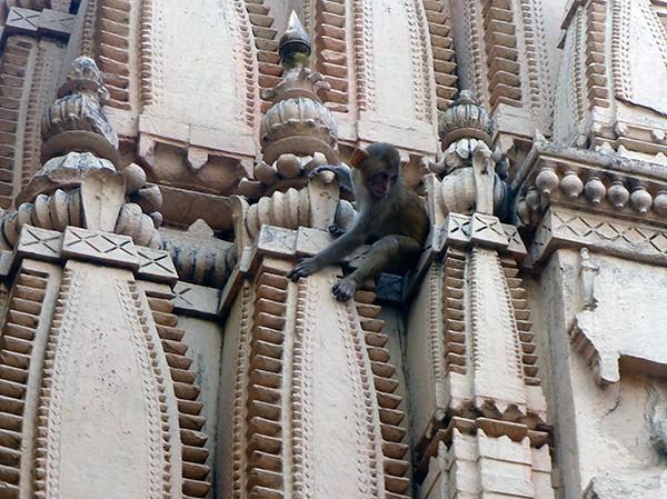 Monkey on Temple (Varanasi)
