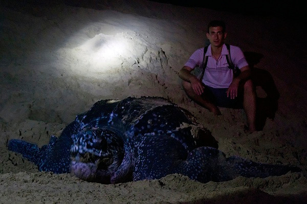 Leatherback Turtle, St. Lucia, South Africa