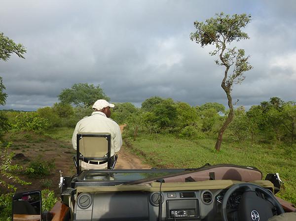 Tracker at Thornybush