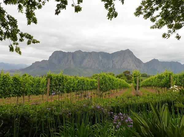 Wine Region, South Africa